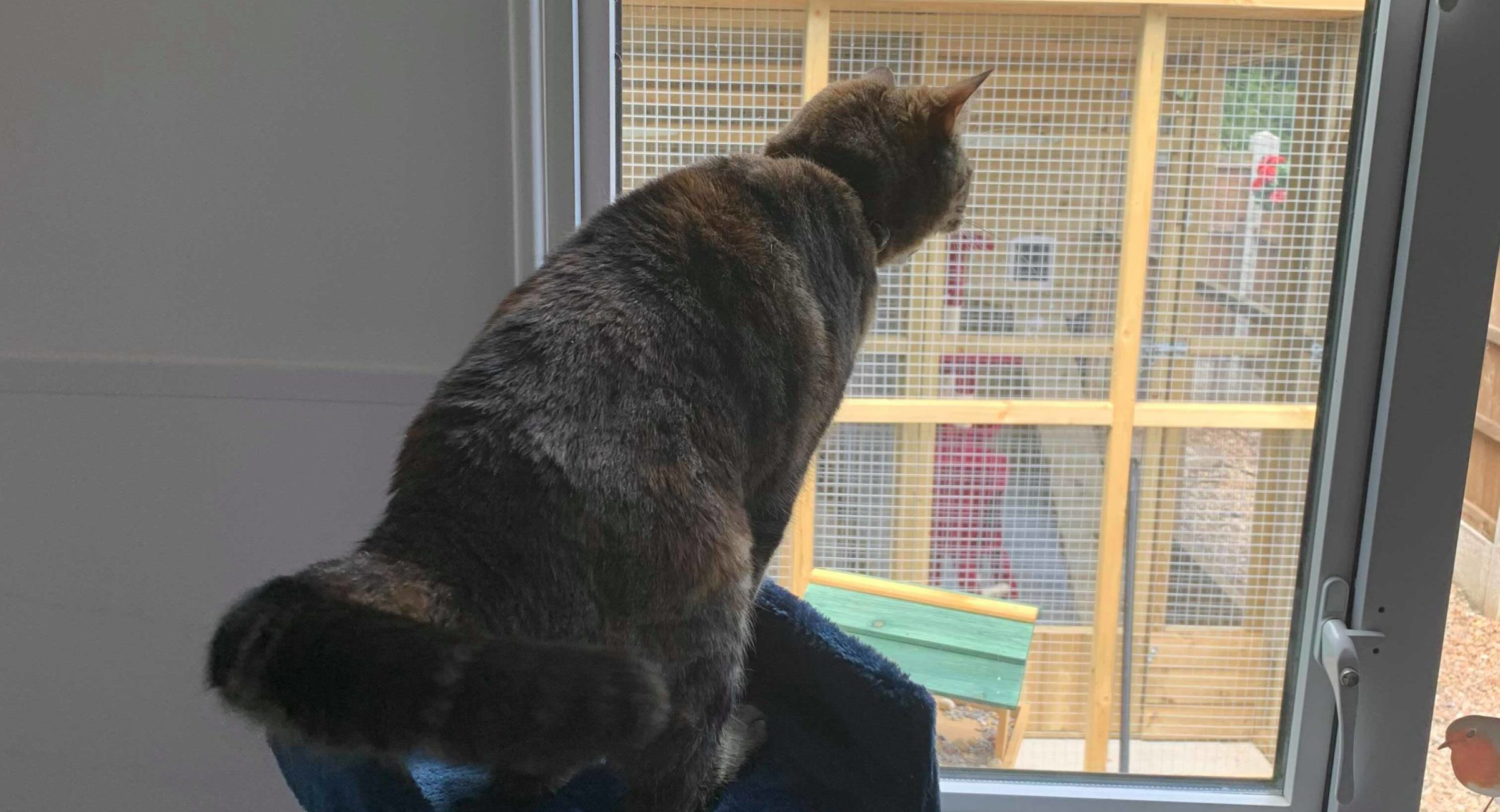 Cattery in Rainham