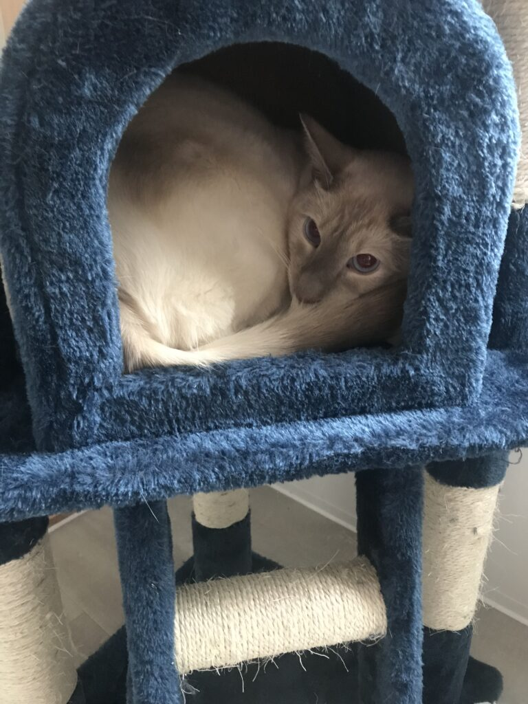 Cattery in Hornchurch